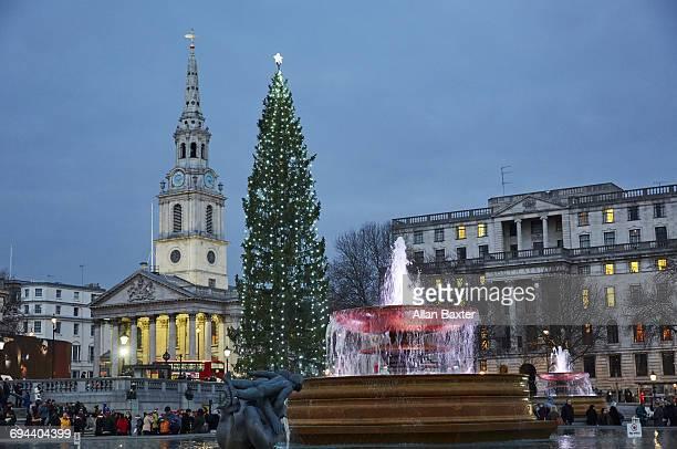christmas tree in trafalger square at dusk - トラファルガー広場 ストックフォトと画像