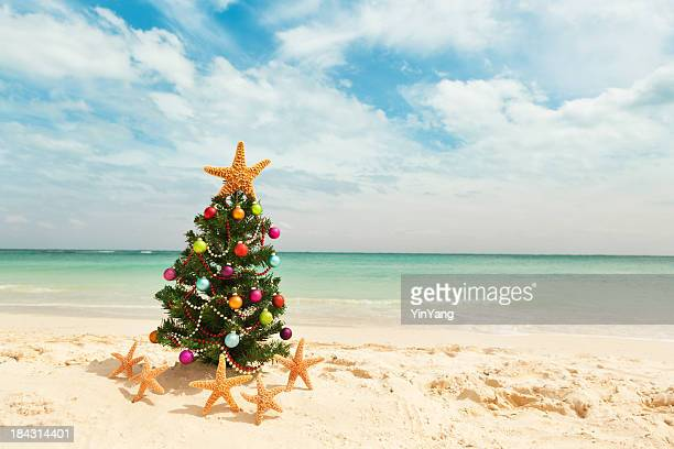 christmas tree in tropical caribbean beach in winter holiday vacation - beach christmas stock pictures, royalty-free photos & images