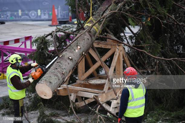 Christmas tree is prepared to be erected at Trafalgar Sq on November 30, 2020 in London, England. Norway have donated a tree to London from the...