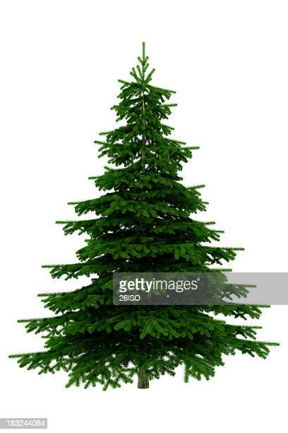 christmas tree isolated on white background - xxxl - bush stock pictures, royalty-free photos & images