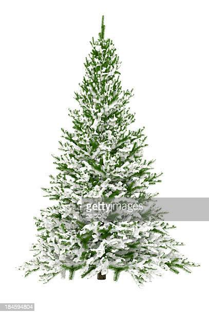Christmas Tree Isolated on White with Snow (XXXL)