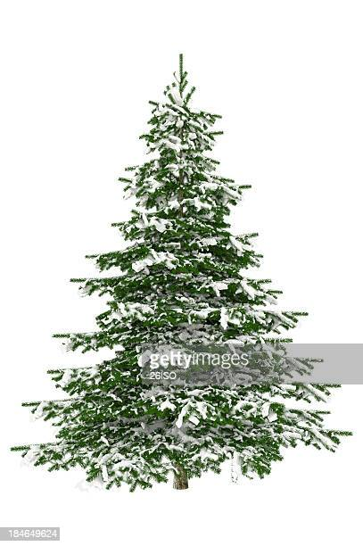 christmas tree isolated on white with snow (xxxl) - christmas trees stock pictures, royalty-free photos & images