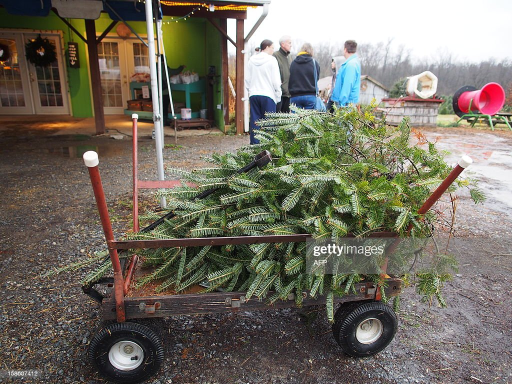 A Christmas tree lies in a cart at Ridgefield Farm in Harper's Ferry, West Virginia, December 9, 2012. Tree growers report growing demand among consumers for smaller and more natural looking trees. AFP PHOTO / Robert MacPherson