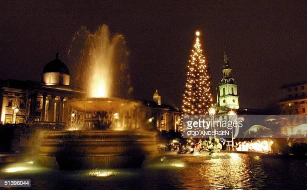 Christmas tree lights up Trafalgar square between the fountain and StMartins church in central London 07 December 2000 The tree a gift of the people...