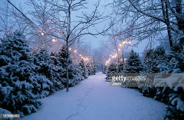 クリスマスツリーのロットの夕暮れ時のスノー。