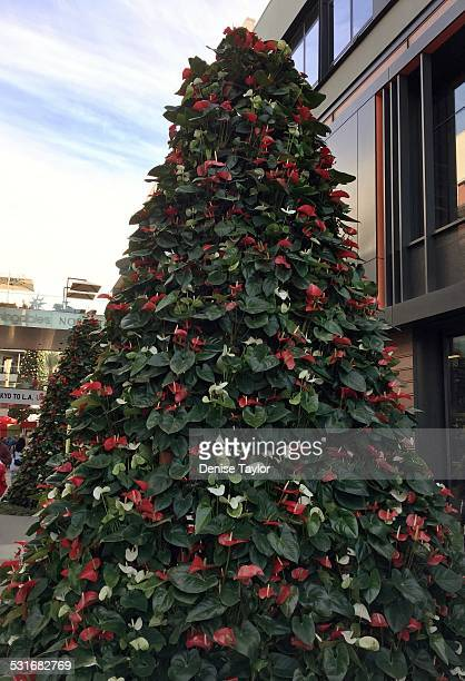 Christmas tree made from living anthurium plants and flowers in a shopping mall in Santa Monica california
