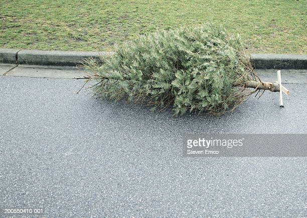 Christmas tree on roadway