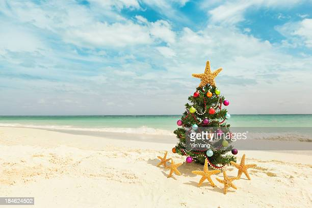 christmas tree on sandy caribbean beach - caribbean christmas stock pictures, royalty-free photos & images