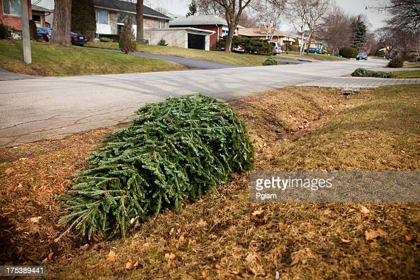 christmas tree on the curb for garbage - curb stock pictures, royalty-free photos & images