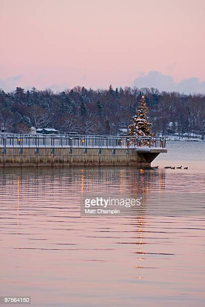 Christmas Tree on the Lake