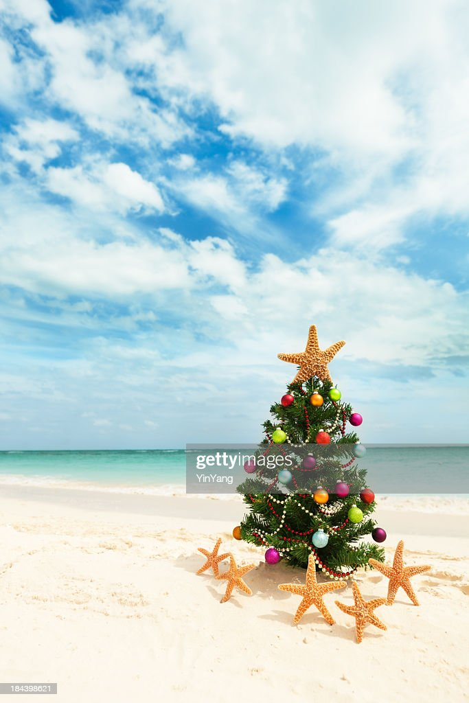 Christmas Tree on Tropical Caribbean Beach in Winter Holiday Vacation : Stock Photo