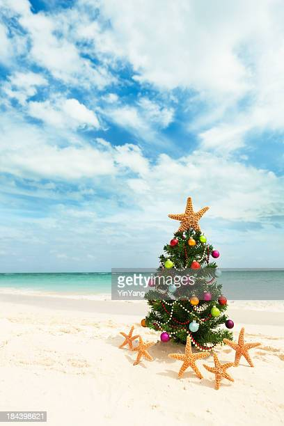 christmas tree on tropical caribbean beach in winter holiday vacation - mexican christmas stock photos and pictures
