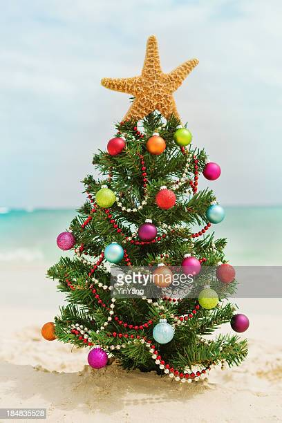 christmas tree on tropical caribbean white sand beach - mexican christmas stock photos and pictures
