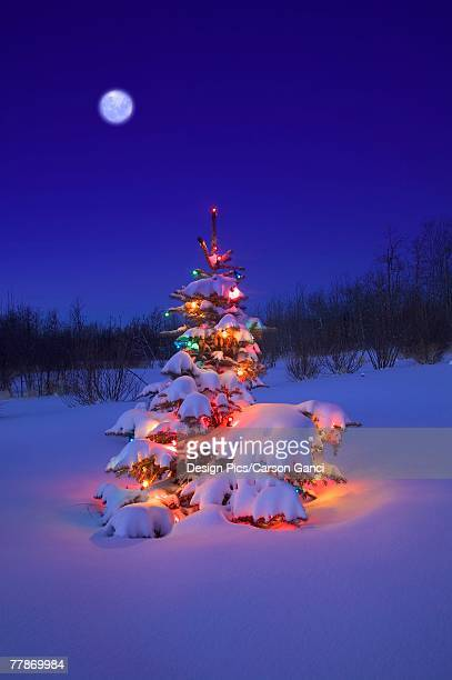 Christmas tree outdoors glowing at night covered in snow