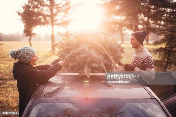 Arbre de Noël de cueillette