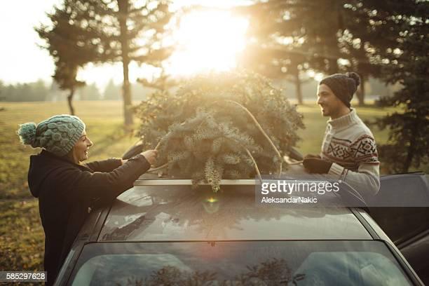 Weihnachtsbaum Pflücken
