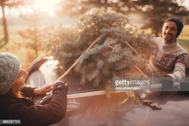 Christmas tree picking