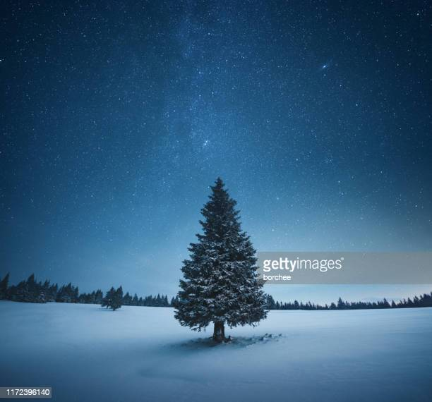 kerstboom - night stockfoto's en -beelden