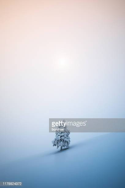 christmas tree - winter sky stock pictures, royalty-free photos & images