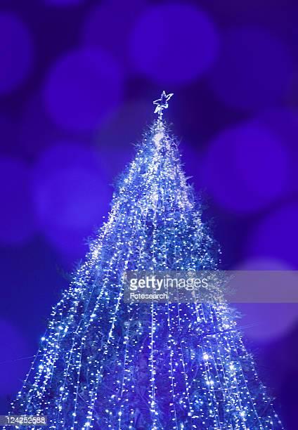 christmas tree - kanto region - fotografias e filmes do acervo