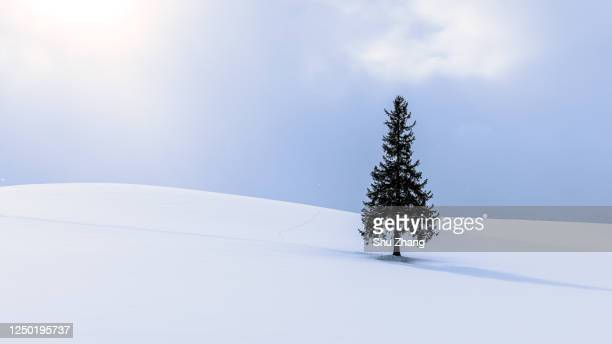 christmas tree - snowfield stock pictures, royalty-free photos & images