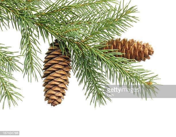 christmas Weihnachtsbaum