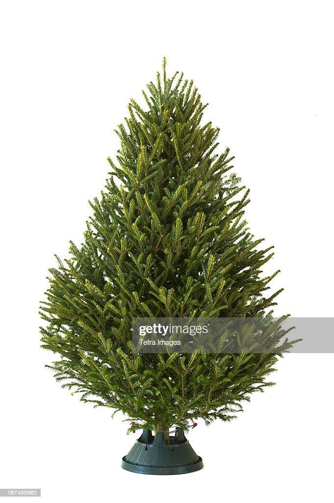 Christmas tree : Stock Photo