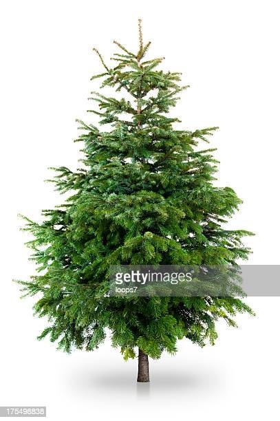 christmas tree - evergreen stock pictures, royalty-free photos & images