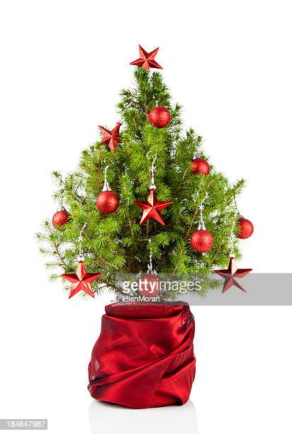 christmas tree - small stock pictures, royalty-free photos & images