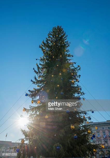 christmas tree - cielo sereno foto e immagini stock