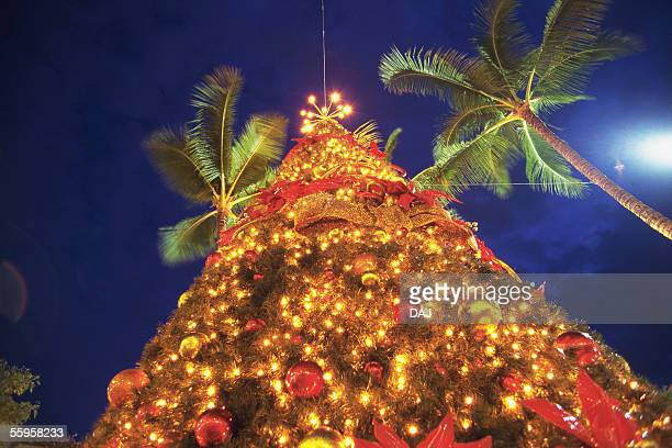 christmas tree - hawaii christmas stock pictures, royalty-free photos & images