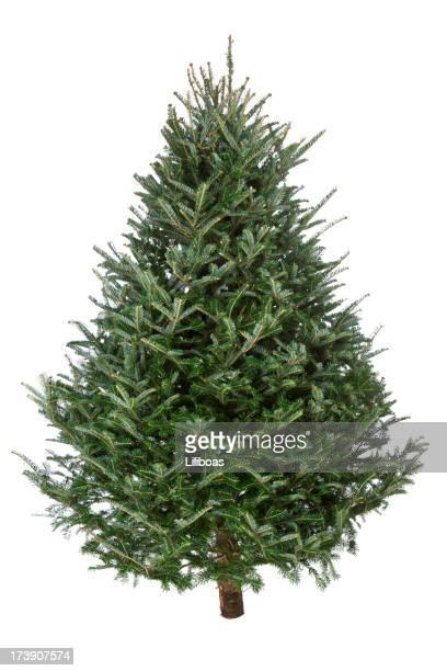 christmas tree, real fraser fir - christmas tree stock pictures, royalty-free photos & images