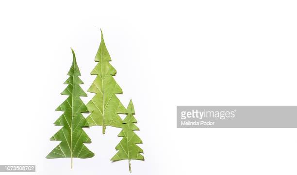 christmas tree shapes cut from mulberry leaves - resourceful stock pictures, royalty-free photos & images