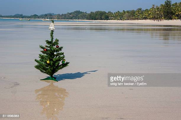 Christmas tree standing on sandy beach