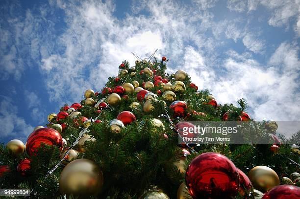 Christmas Tree to the Sky