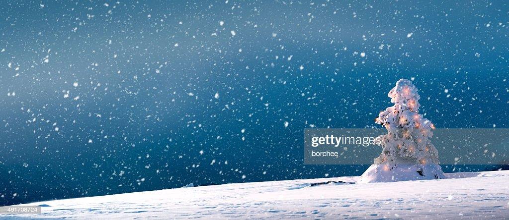 Christmas Tree With Lights And Snow - Panoramic : Stock Photo