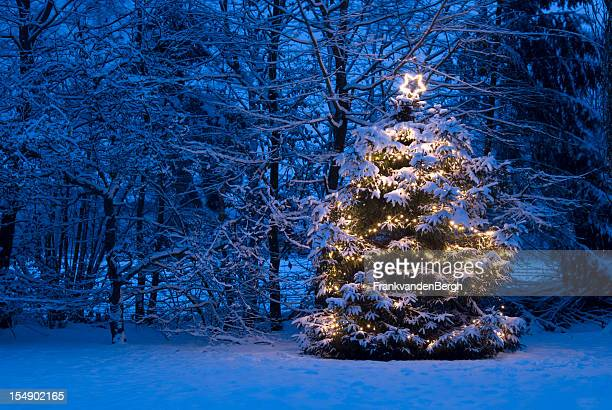 christmas tree with lights in the snow - christmas tree stock pictures, royalty-free photos & images