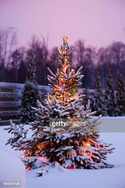 Weihnachtsbaum mit frischen und flauschigen Schnee