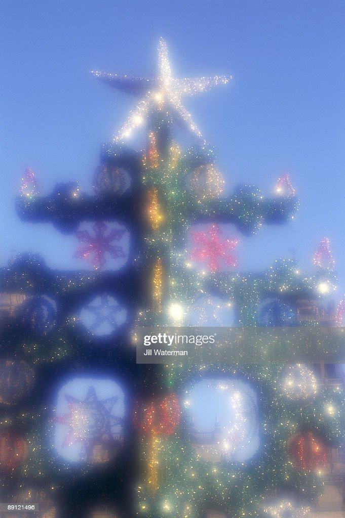 Christmas tree with star : Stock Photo