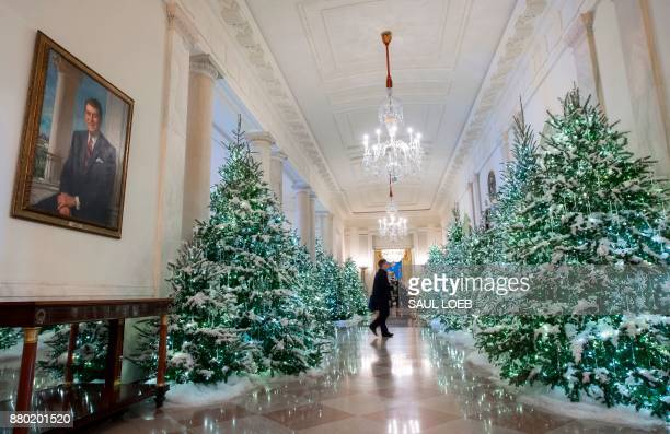 christmas trees are seen in the cross hall during a preview of holiday decorations at the