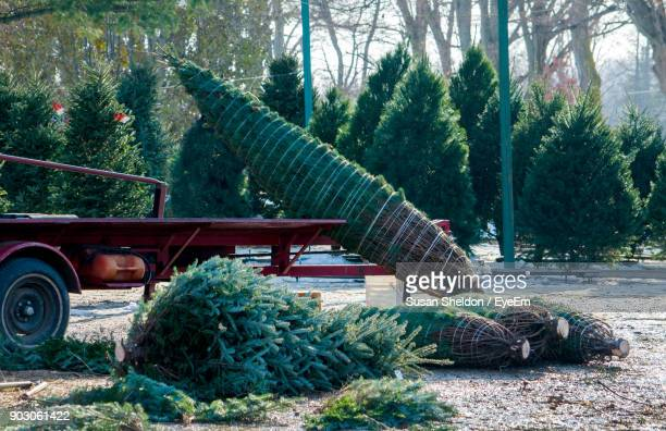 christmas trees by vehicle on field - christmas tree farm stock pictures, royalty-free photos & images