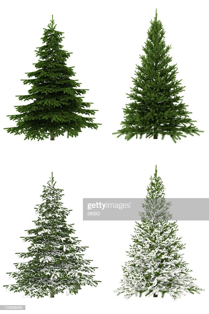 Christmas Trees COLLECTION / SET on Pure White Background (65Mpx-XXXL) : Stock Photo