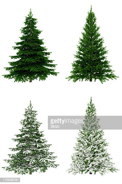 christmas trees collection / set on pure white background (65mpx-xxxl) - christmas tree stock pictures, royalty-free photos & images