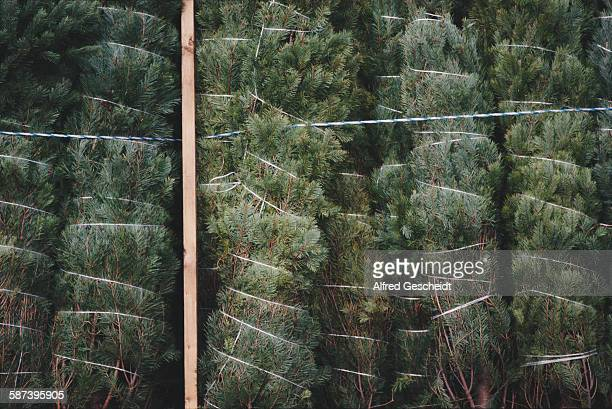 Christmas trees for sale in New York City 1991