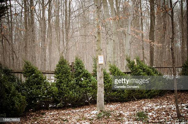 """christmas trees for sale - """"danielle donders"""" stock pictures, royalty-free photos & images"""