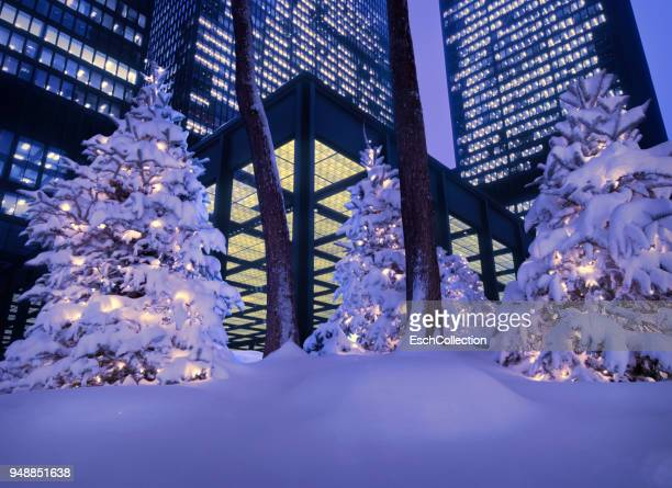 Christmas trees in front of modern office buildings