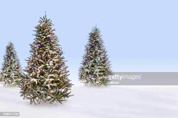 christmas trees in the snow - barrväxter bildbanksfoton och bilder