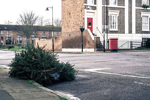 Feature: Lonely Christmas Trees Photos And Images