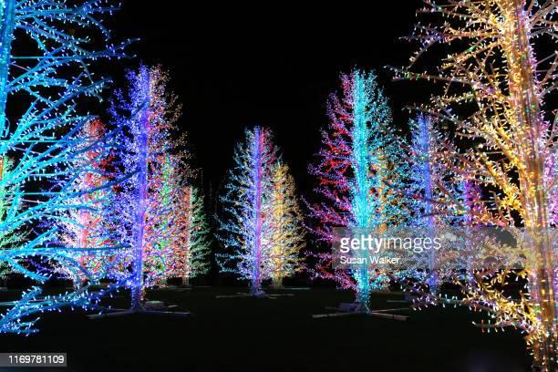 christmas trees - ロンドン ハイドパーク ストックフォトと画像