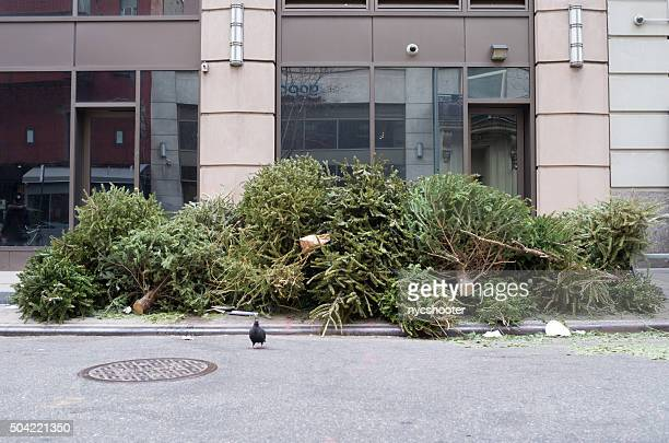 christmas trees set on street as trash - curbside pickup stock pictures, royalty-free photos & images